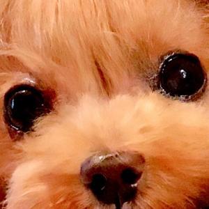 bebe&coco  (^ω^;);););)  毛玉だらけ…ギブアップ