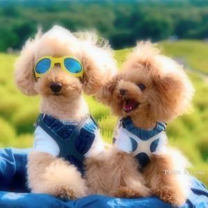bebe&coco  (*ˊ˘ˋ*)。♪:*°るんるん  ③ お二人さんの笑顔がみたくて…