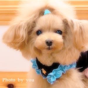 bebe&coco  (ノ)・ω・(ヾ)ムギュ~  早く会いたい…
