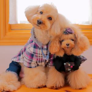 bebe&coco  (o゚ω゚)チーン  コストコ《台湾風まぜそばセット》