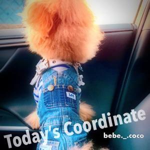 bebe&coco  (๑¯ω¯๑)ンー・・・   ② ほらね〜