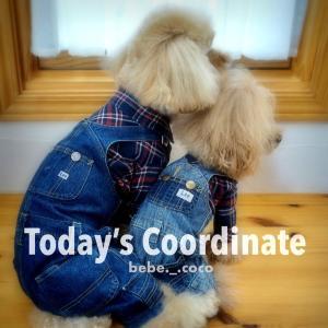 bebe&coco  ( •ω-  )☆  今日は何して遊ぶ?
