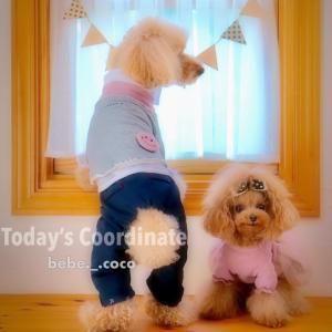 """bebe&coco  (゚∀゚ノノ""""☆パチパチパチ★  バースデーソング…歌います❗"""