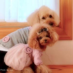 """bebe&coco  (*´˘`*)⊂(´˘`๑)""""   バースデーケーキ❗"""