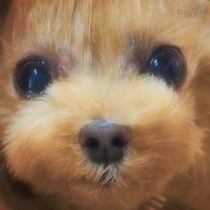 bebe&coco  (♥ω♥*)キュンキュン♡*゜ 今日も癒されてます
