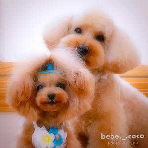 bebe&coco  (*ˆ﹀ˆ*)v  シャンプーの間に【無印良品】へ