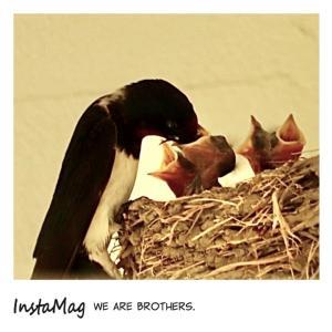 bebe&coco  ˏ₍•ɞ•₎ˎˏ₍•ɞ•₎ˎˏ₍•ɞ•₎ˎˏ₍•ɞ•₎ˎ  ❾僕らは兄弟!