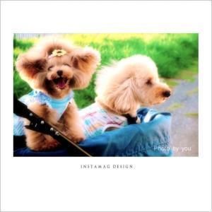 bebe&coco  ☆*:.。. o(≧▽≦)o .。.:*☆  久しぶりに海辺まで夕散歩です