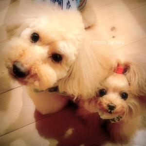 bebe&coco ゜Д゜)━━━━!!!!!!  なんと‼️
