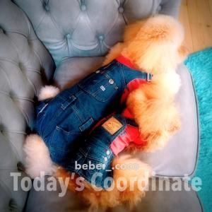 bebe&coco  (*゚・゚)ンッ?  パンツー丸見え❗️