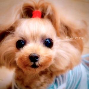 bebe&coco  ぇ━(*´・д・)━!!!  歯医者さんて…