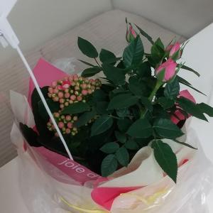 主人の誕生プレゼントは誰から・・・