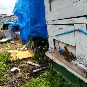 第二養蜂場の内検