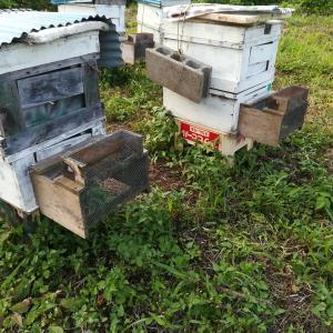 スズメバチ対策