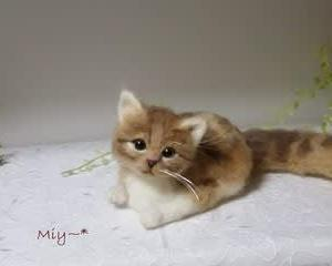猫ちゃん♪生まれました(*^^*)