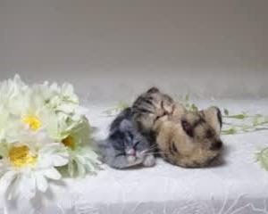 ちび猫ちゃん♪2匹生まれました(*^^*)