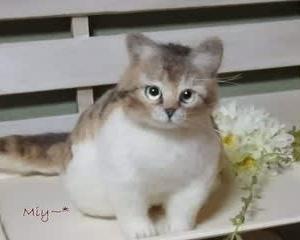 大きめサイズの猫さん♪生まれました(^^♪