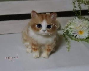 猫ちゃん♪生まれました(^^♪