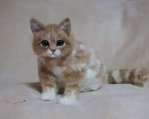 猫さん♪生まれました(*^-^*)