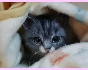 猫ちゃん♪生まれました(*^-^*)