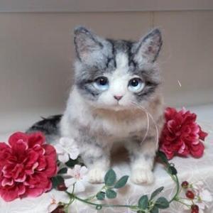 羊毛っ子 猫さん♪生まれました(*^^*)