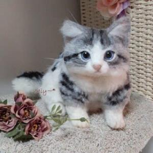 羊毛フェルトから生まれた猫さん♪