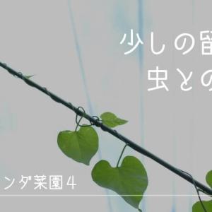 【ベランダ菜園4】少しの留守と虫との闘い