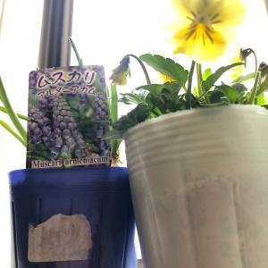 大好きな窓際に咲いた