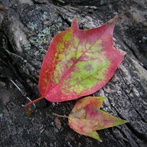 中秋の落ち葉事情