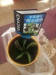 食虫植物。