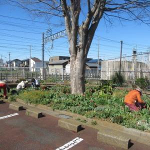 高柳 地域の庭