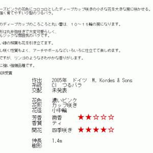 オープンガーデンG20・・・バラたち   4