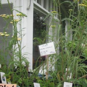 紫竹ガーデン・・・5