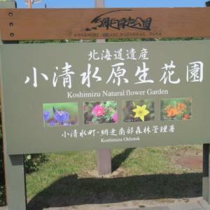 小清水原生花園・・・2