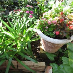 我が家の花たち・・・1