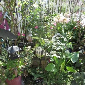 我が家の 秋の花たち・・・