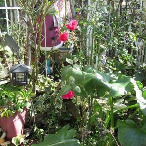 我が家の 秋の花