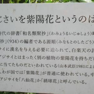 六月は・・・紫陽花