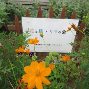 花と緑・リラの会