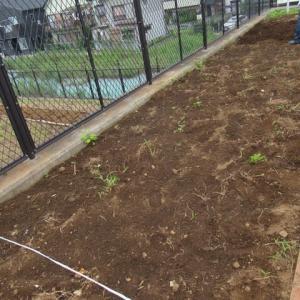 でんしゃ公園花壇・・・ボランティア活動・・・5