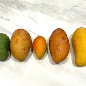 マンゴー食べ比べ