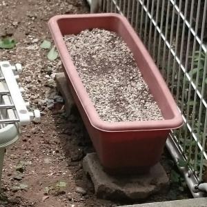 夏に向けて何を植えよう。。。