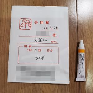 保護38日目★軟膏