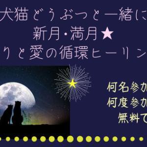 〈新たな始まり〉10/14牡羊座満月★犬猫と一緒に祈りと愛の循環ヒーリング