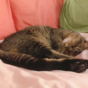 ラズ猫の下部尿路疾患物語②
