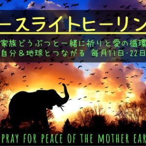 ELH.2〈受け容れる力〉2/22☆犬猫どうぶつと一緒に祈りと愛の循環ヒーリング