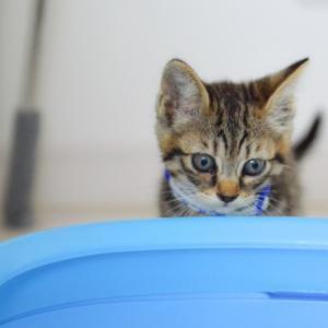 猫の便秘に可溶性食物繊維の効果とは?