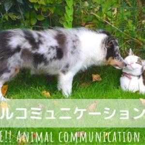 Facebookライブ配信【アニマルコミュニケーションライフ】