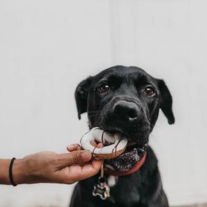 犬猫ペットの健康のために飼い主ができる胃腸ケア