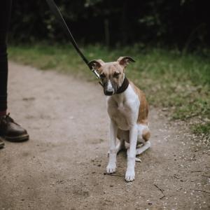 犬が散歩で人を怖がる時に飼い主さんができること
